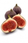 black fig, fresh